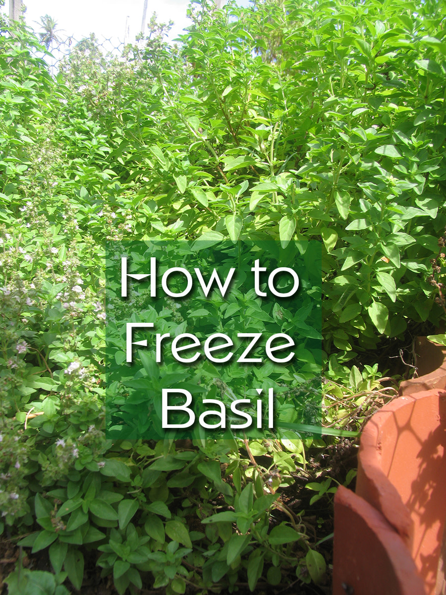 How to Freeze Fresh Basil | Delishably