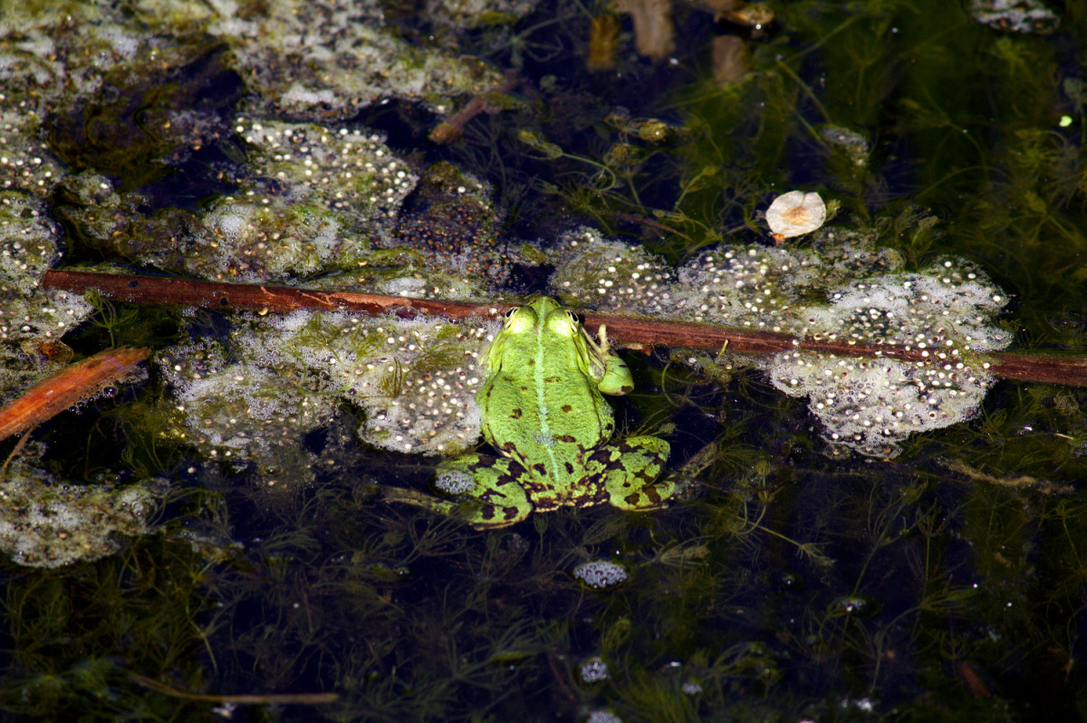 A simple project on frog spawn, or pond ecosystems, or pollution in ponds can inspire students in a way PowerPoint presentations and practice exam questions never will.