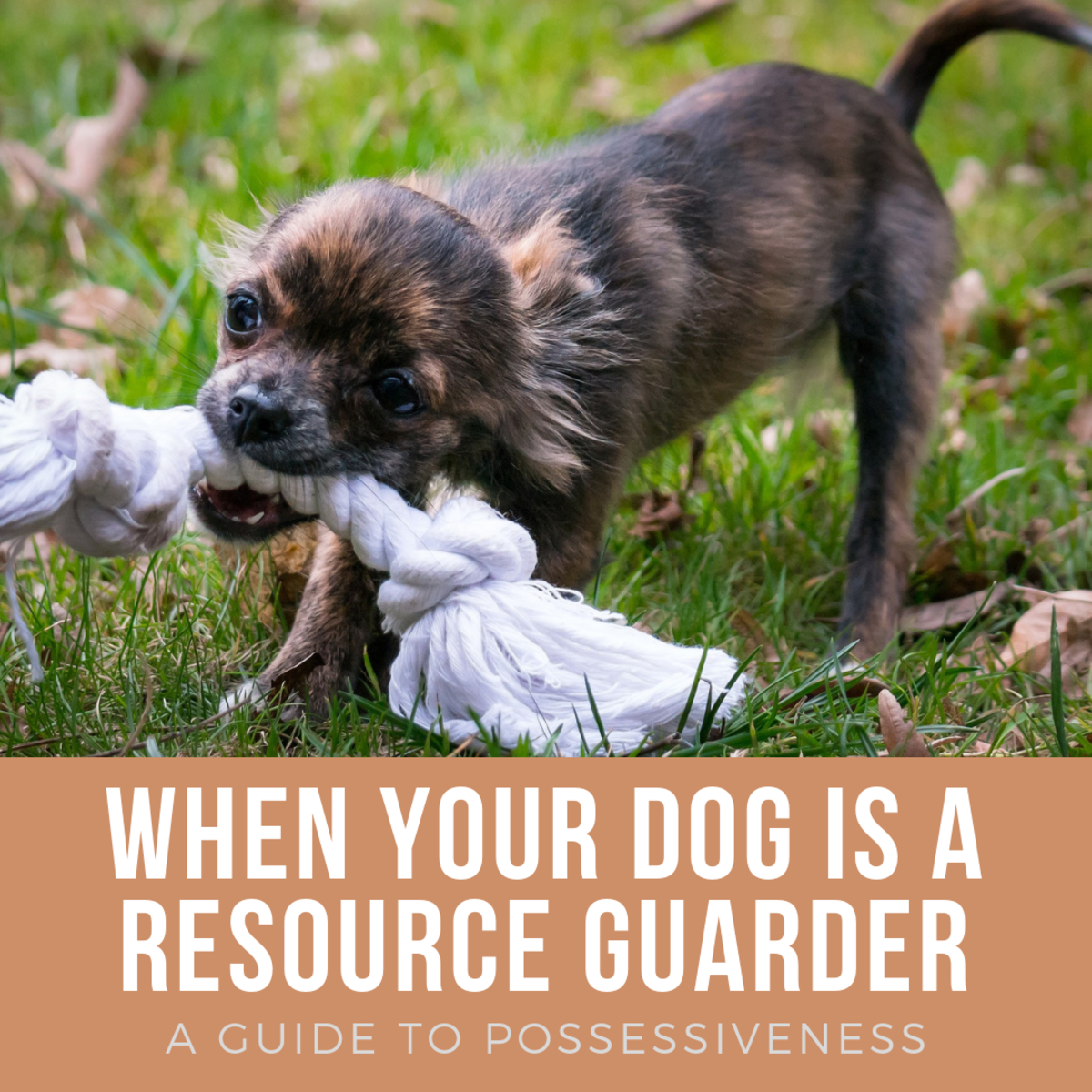 Learn what to do if your dog is possessive.
