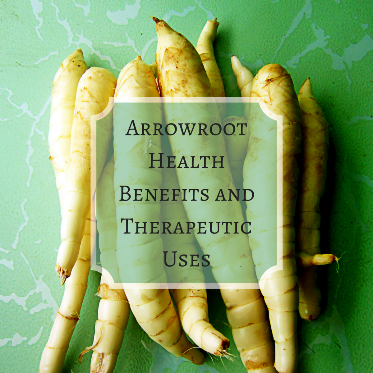 Arrowroot Health Benefits and Therapeutic Uses