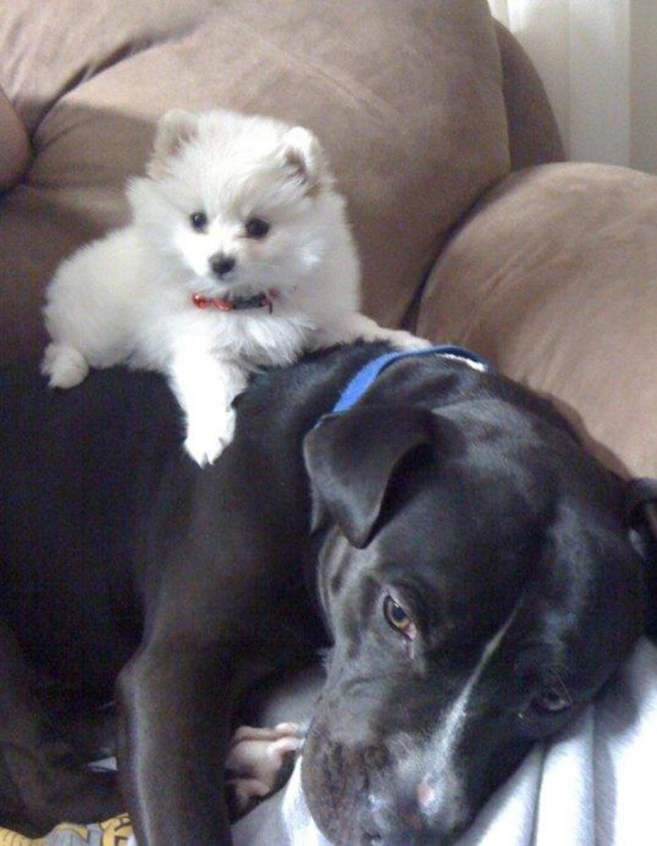 """Meet the taste-testers. """"Please get off me, I just ate a load of dog biscuits and my stomach is full!"""""""