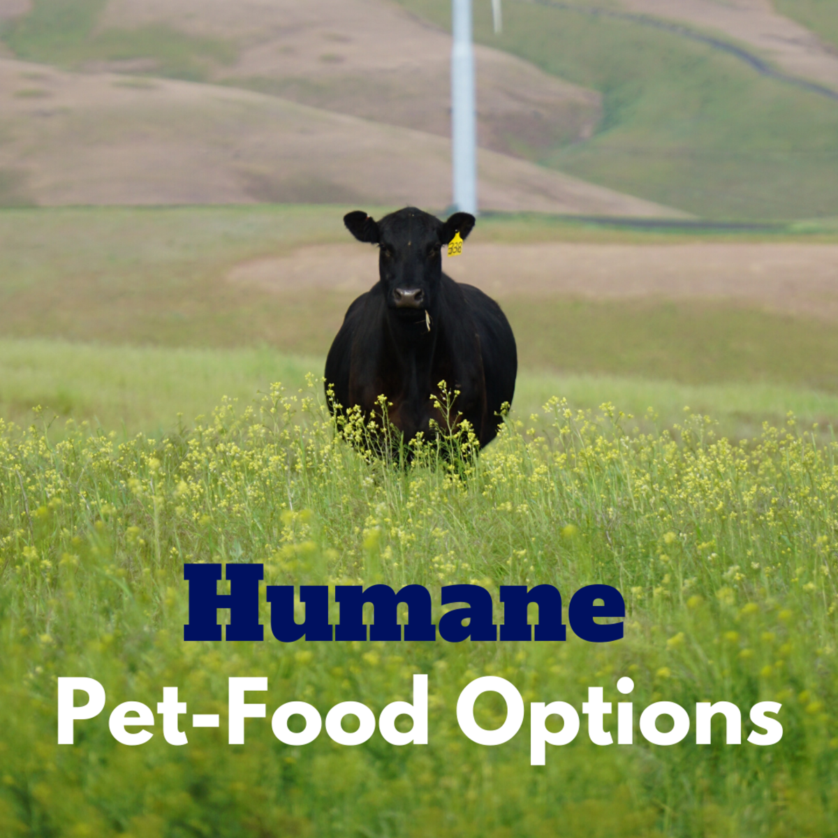 Organic, Free-Range, and Humane Dog and Cat Food Options