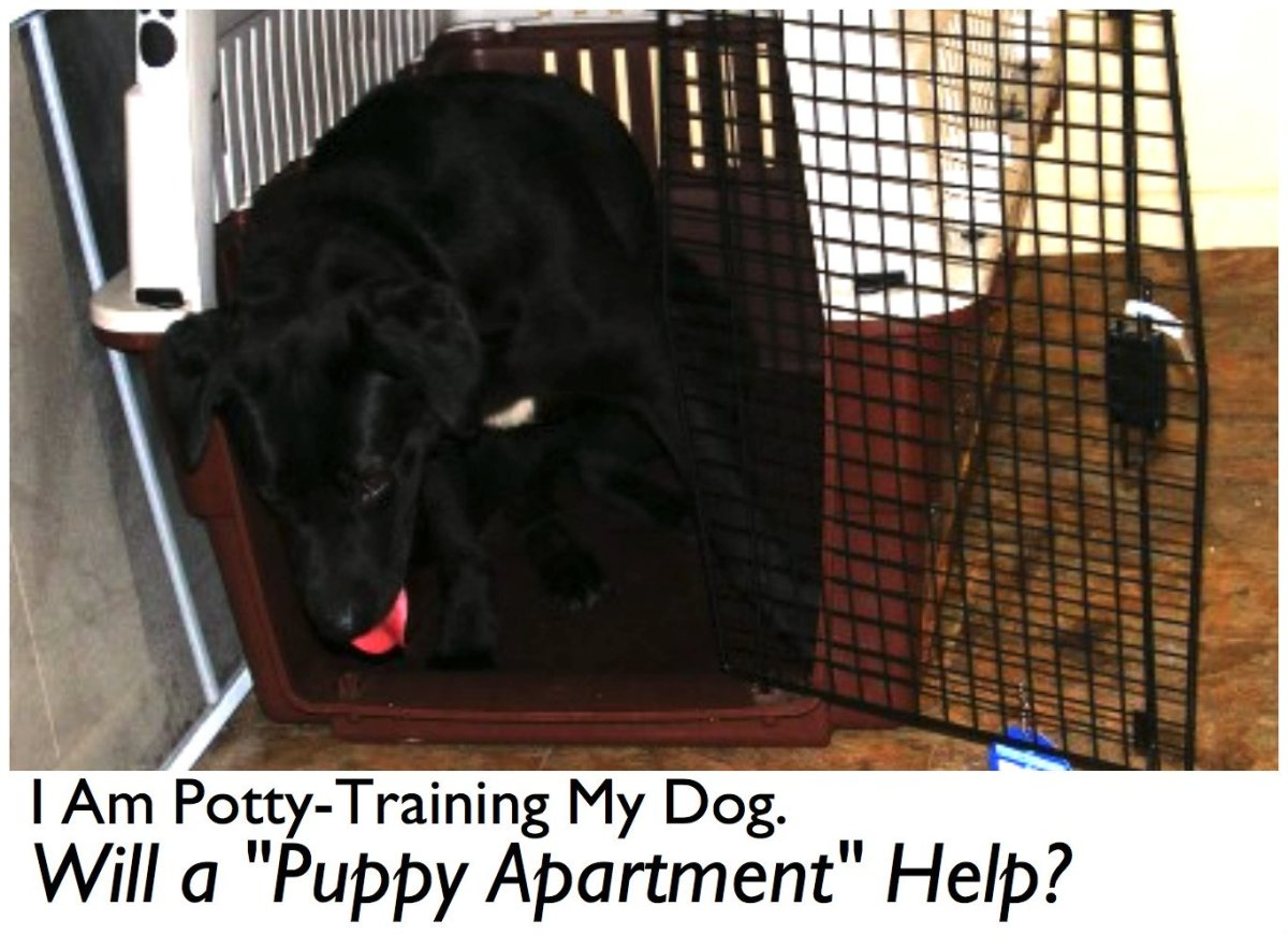 "Are ""puppy apartments"" the new solution to potty training dogs?"