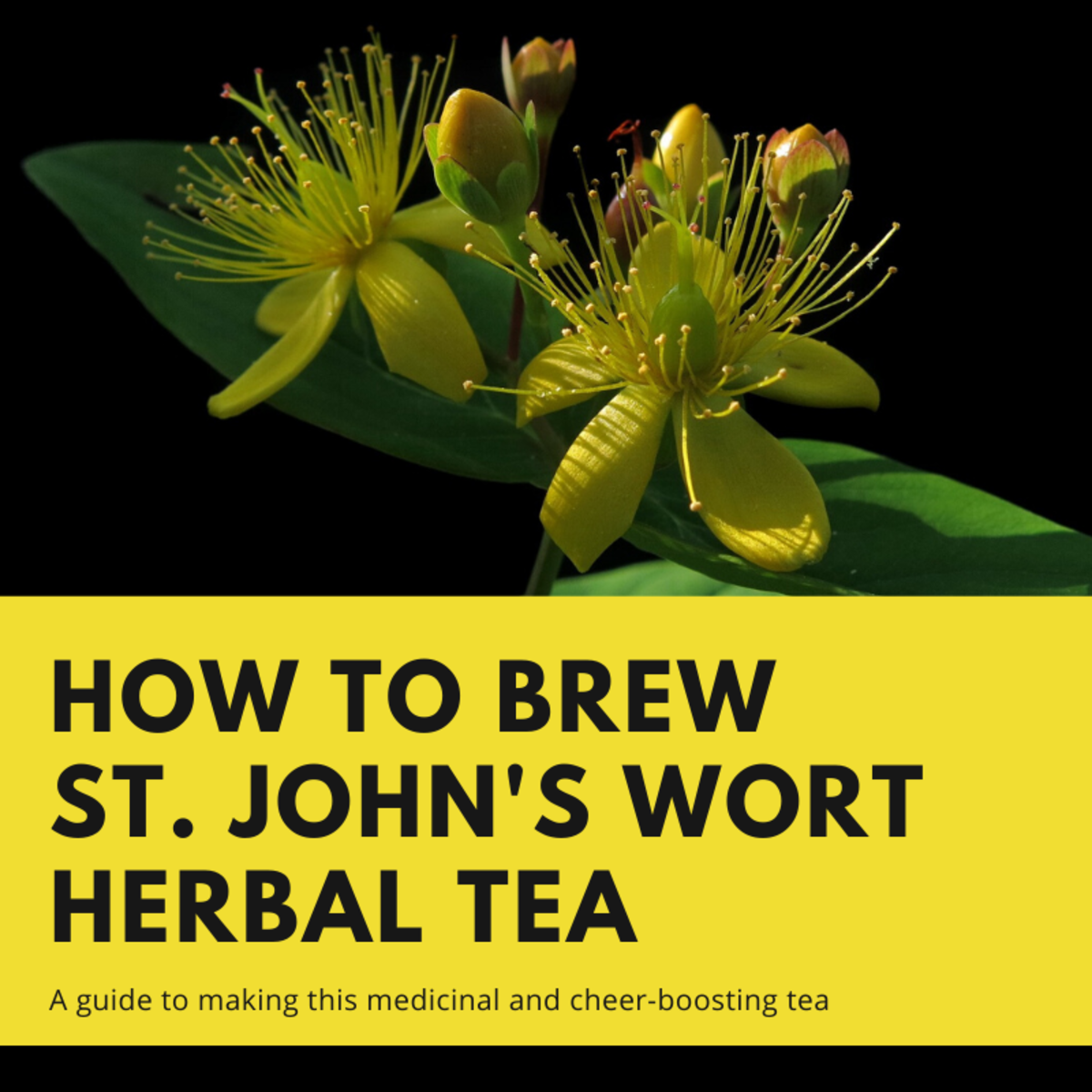 This article will show you how to make herbal tea from St. John's wort.