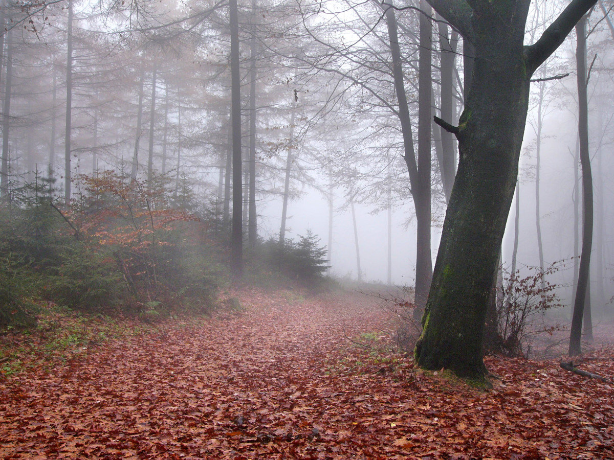 The Teutoburg Forest on a rainy day