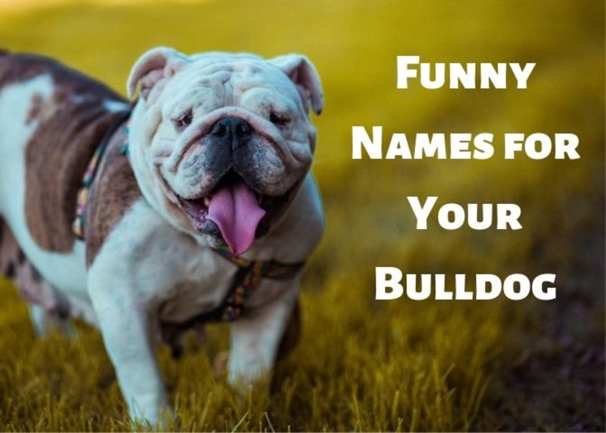 Bulldogs are special creatures that deserve a special name.