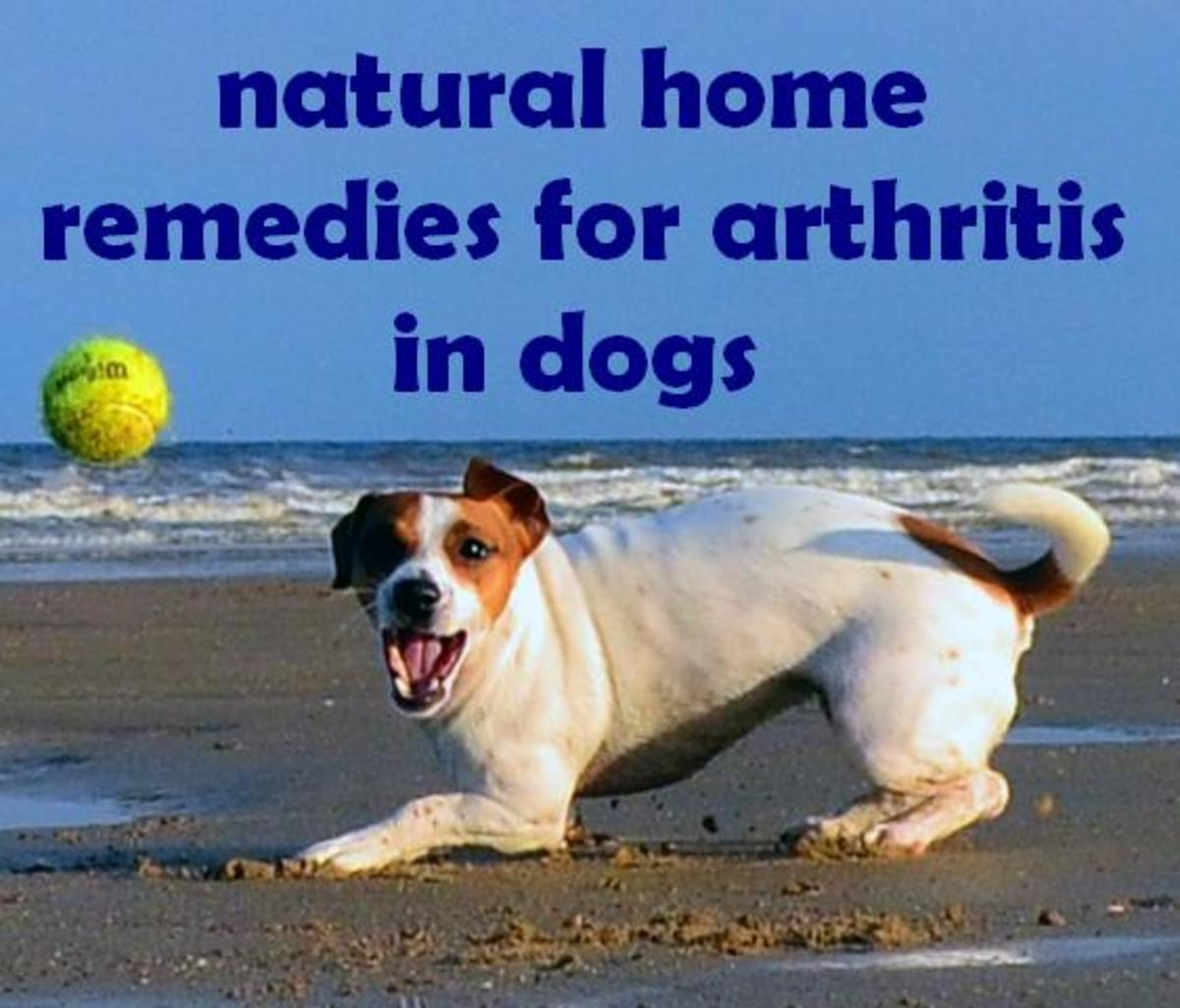 Arthritis in Dogs: Treatment, Natural Home Remedies, Symptoms