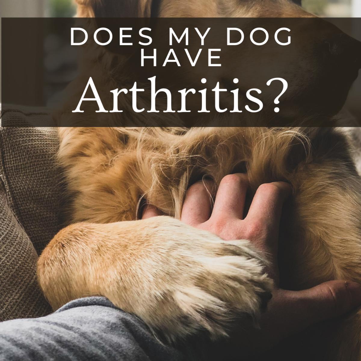 Does my dog have arthritis?