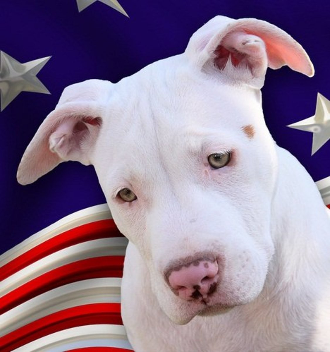 12 Authentic American Dog Breeds (Made in America)
