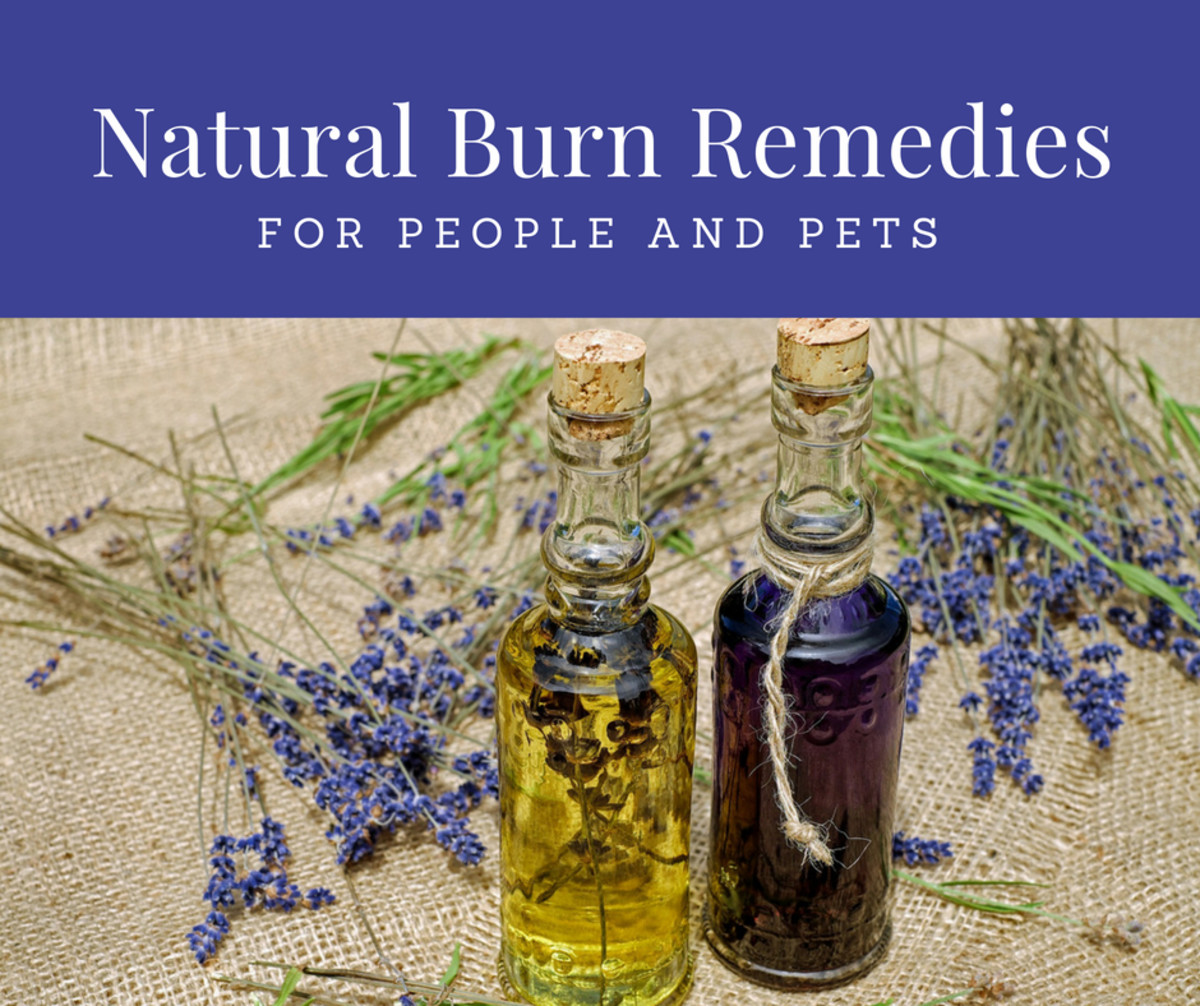 Natural Burn Treatments for People and Pets