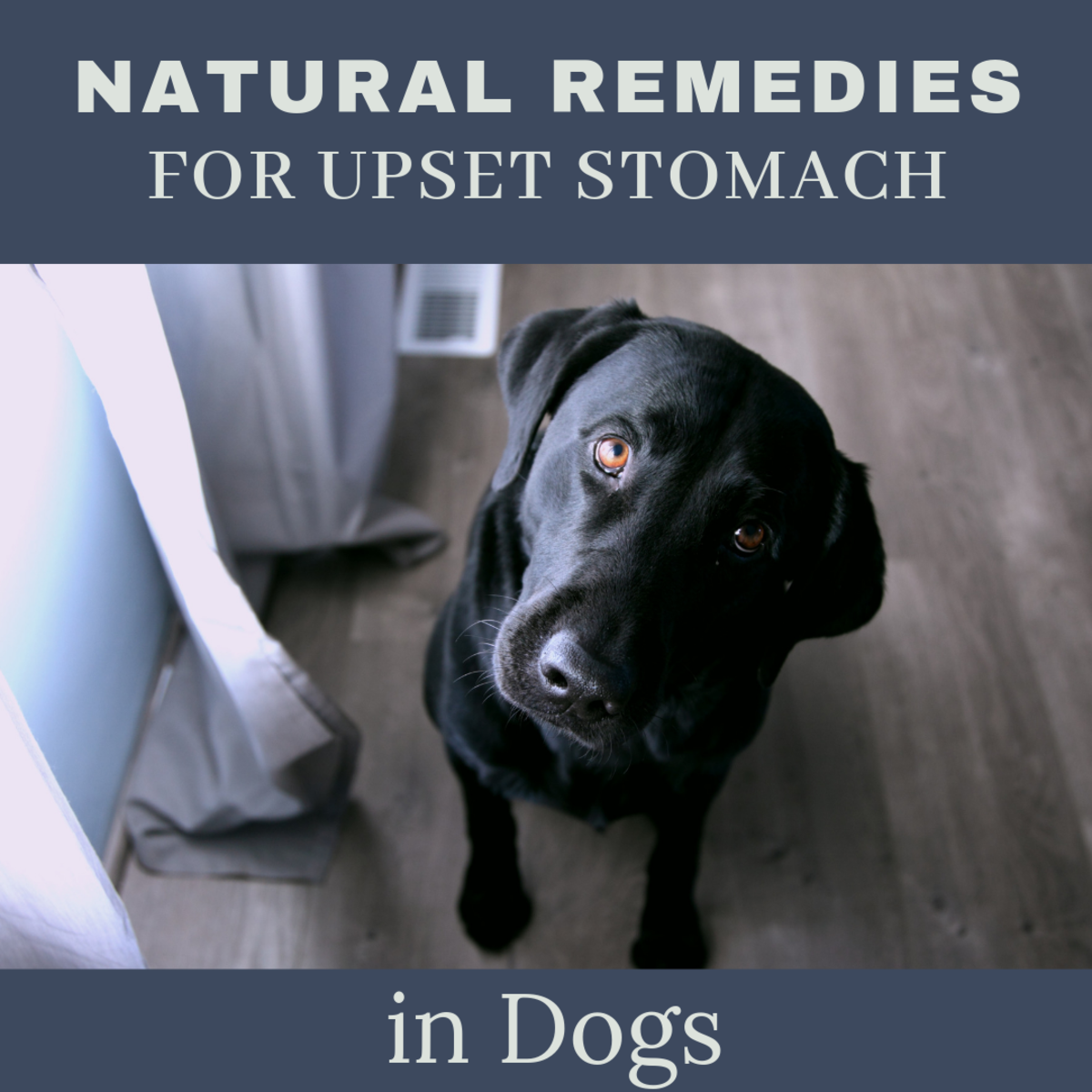 Natural Remedies for Your Dog's Upset Stomach