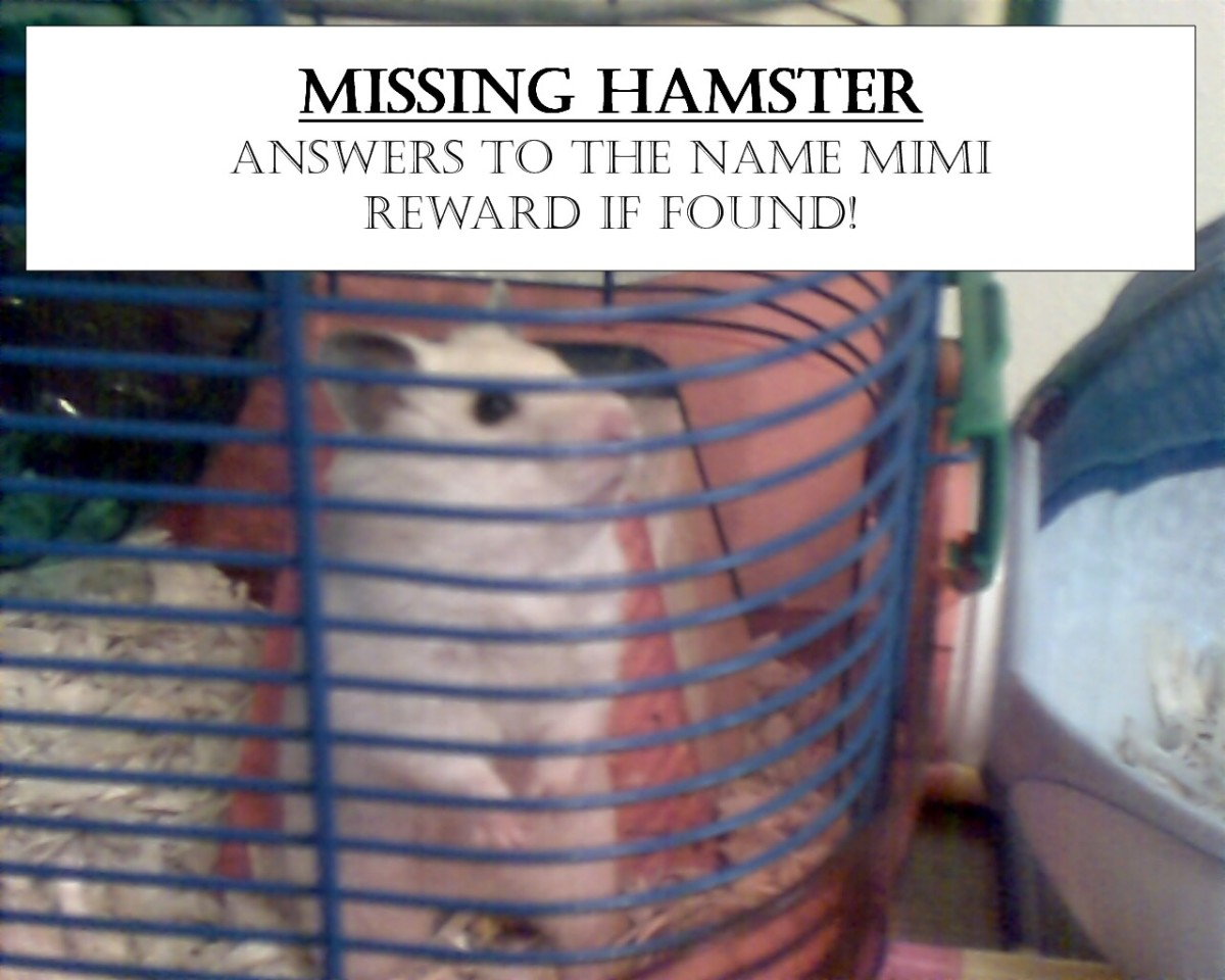 What To Do When Your Hamster is Missing