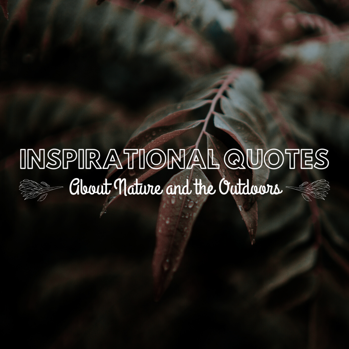 Inspirational Quotes About Nature and the Outdoors