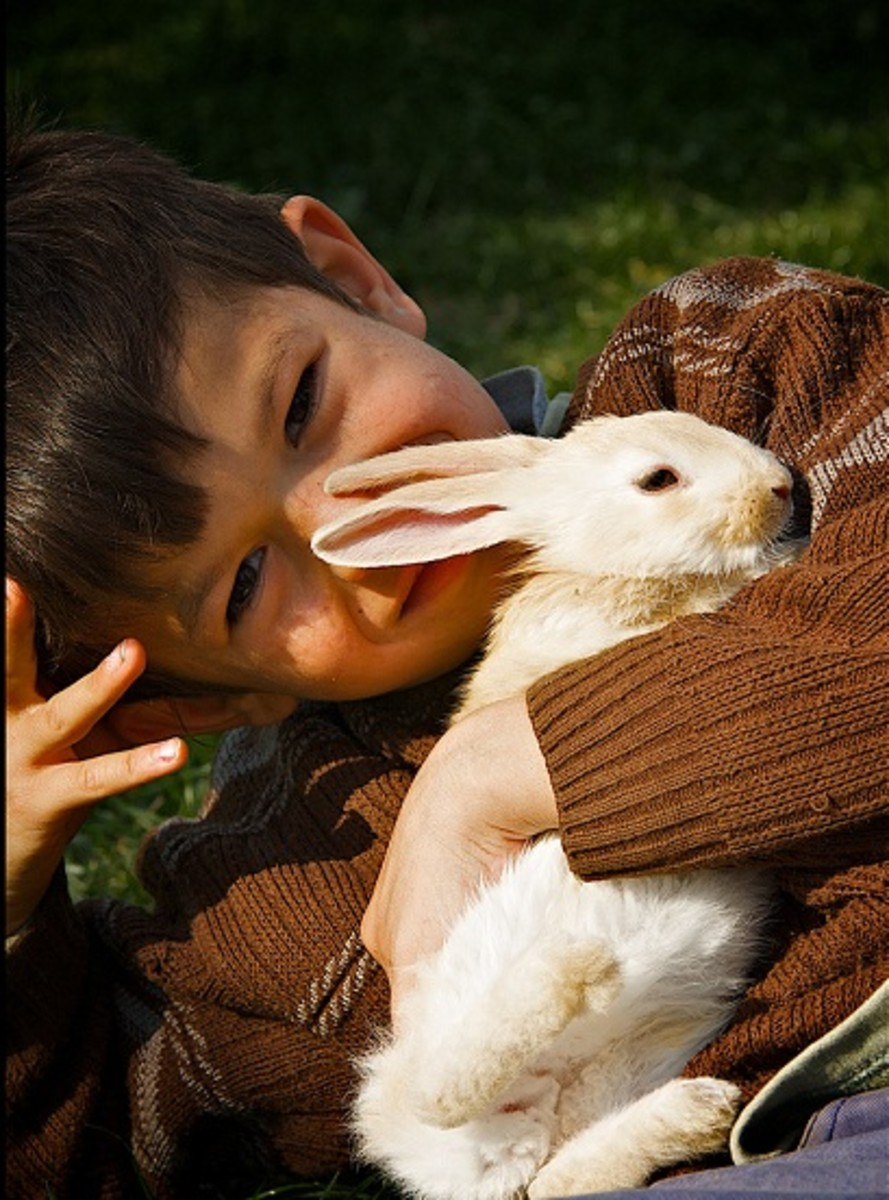 What can children learn from looking after a pet?