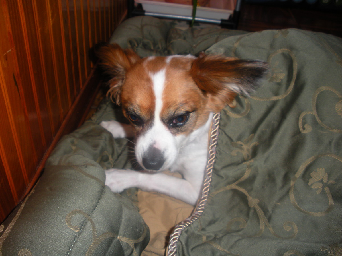 """Make Your Dog a DIY """"Snuggle Sack"""" Bed out of an Old Comforter"""
