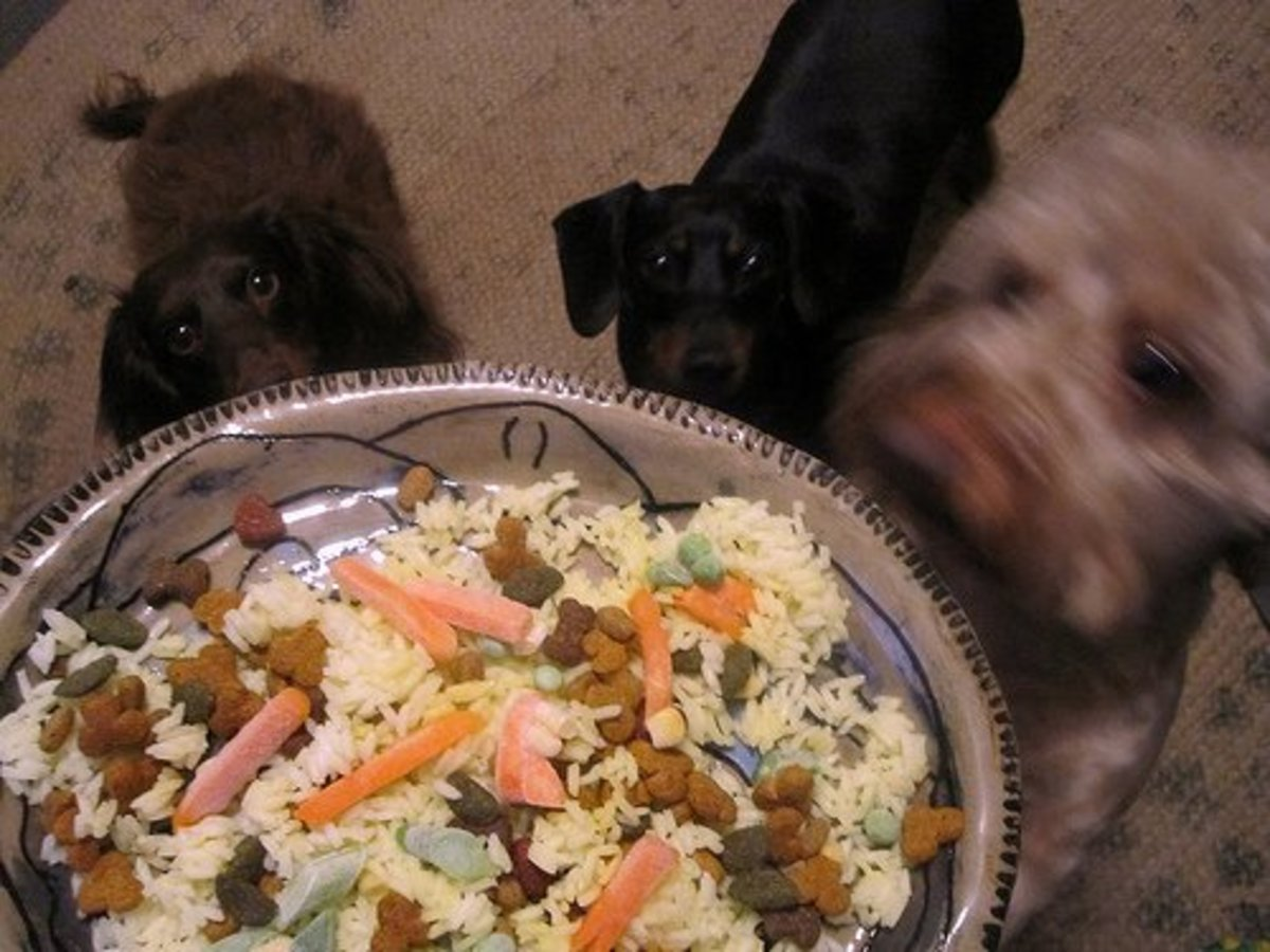 Veggies, Rice, and Dog food
