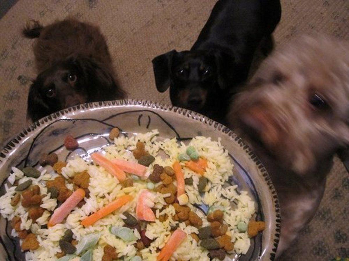 Veggies, Rice, and Dog food