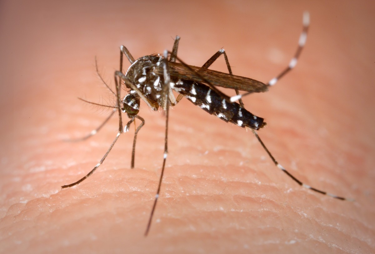 How to Treat Mosquito Bites With Home Remedies