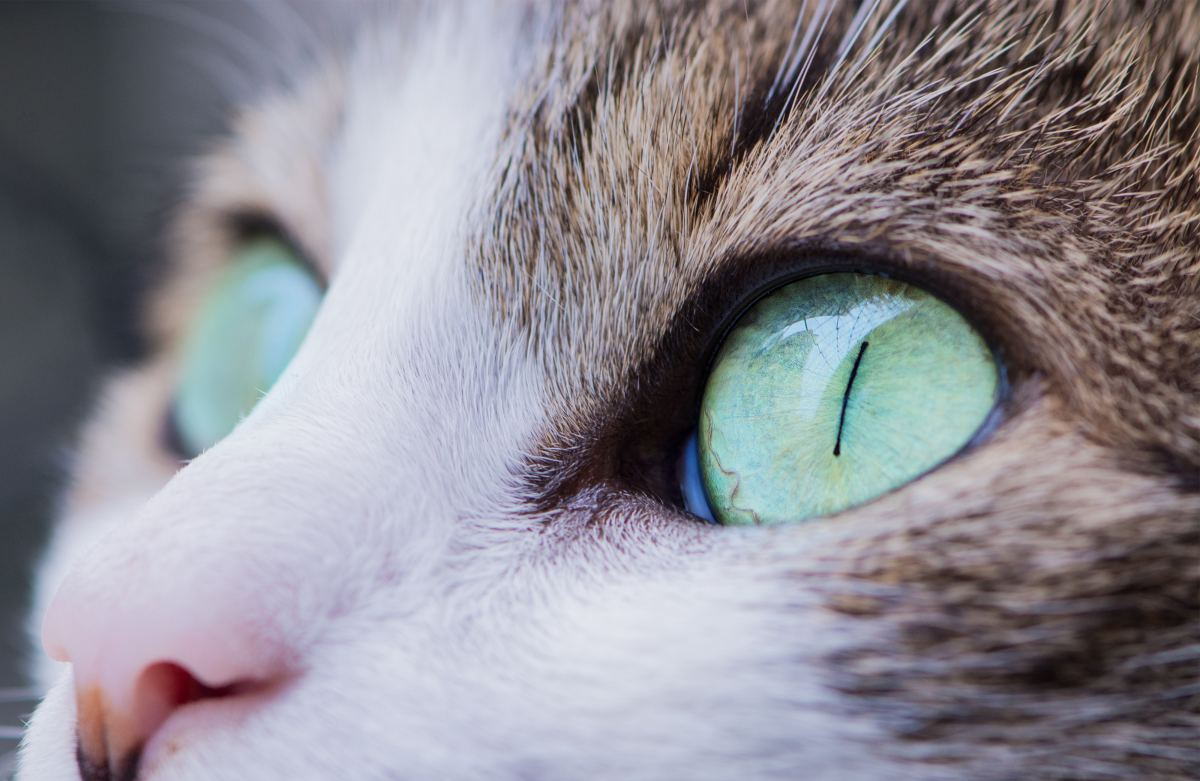 Clear cat eyes are a sight to behold.