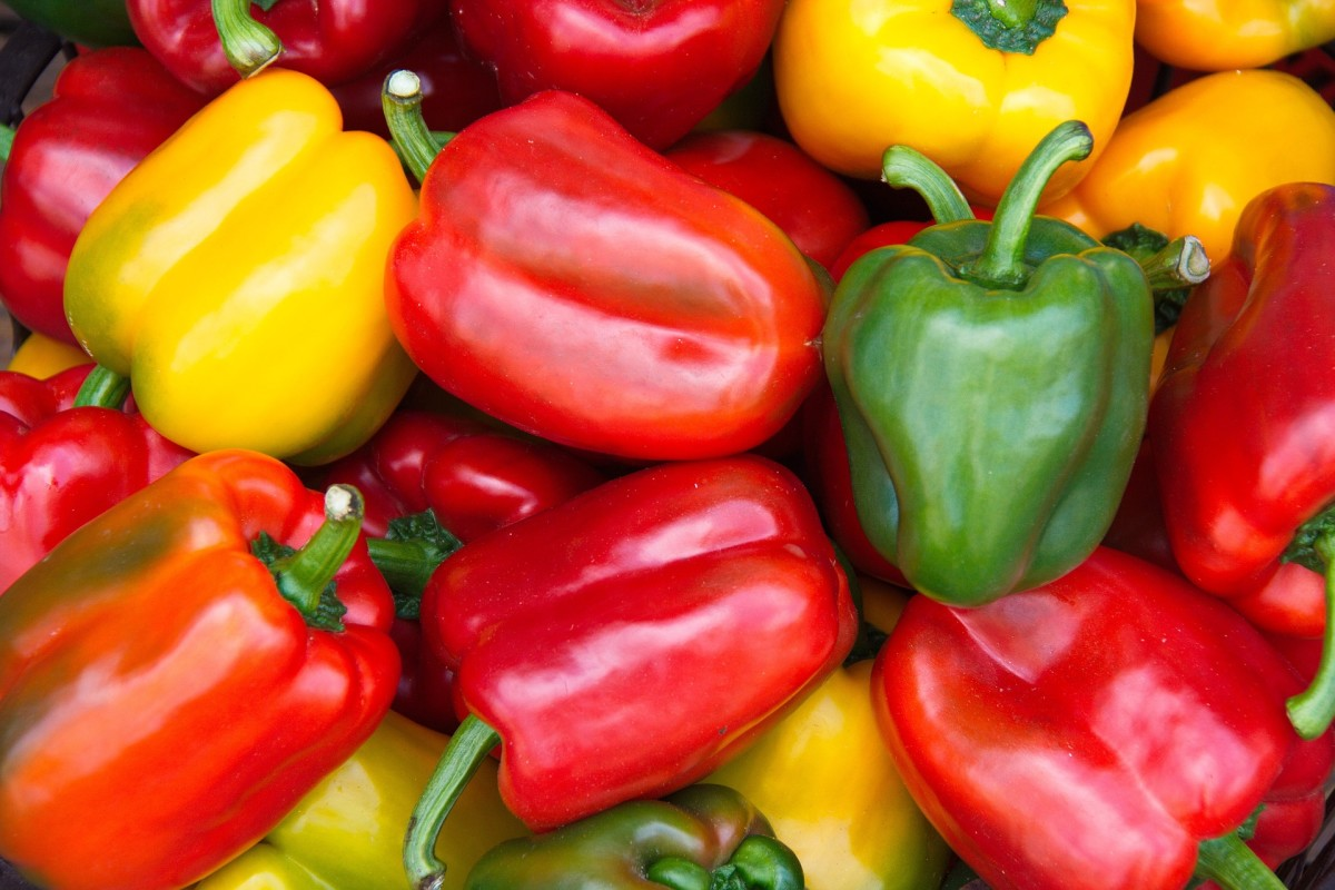 Bell peppers come in the colors green, yellow, orange, and red.