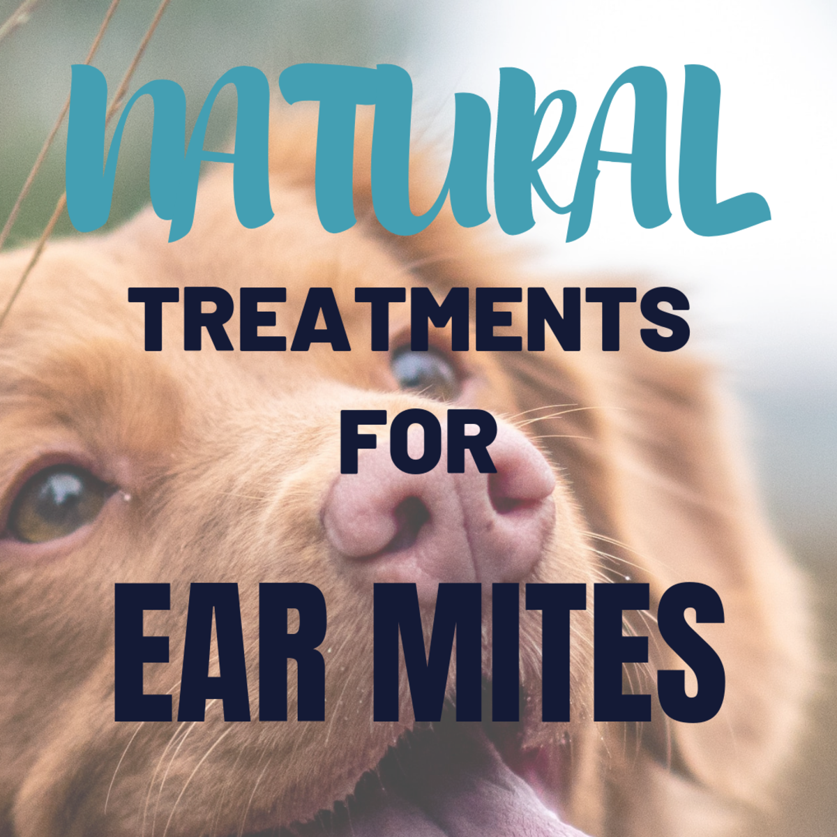 How to Get Rid of Your Dog's Ear Mites Naturally