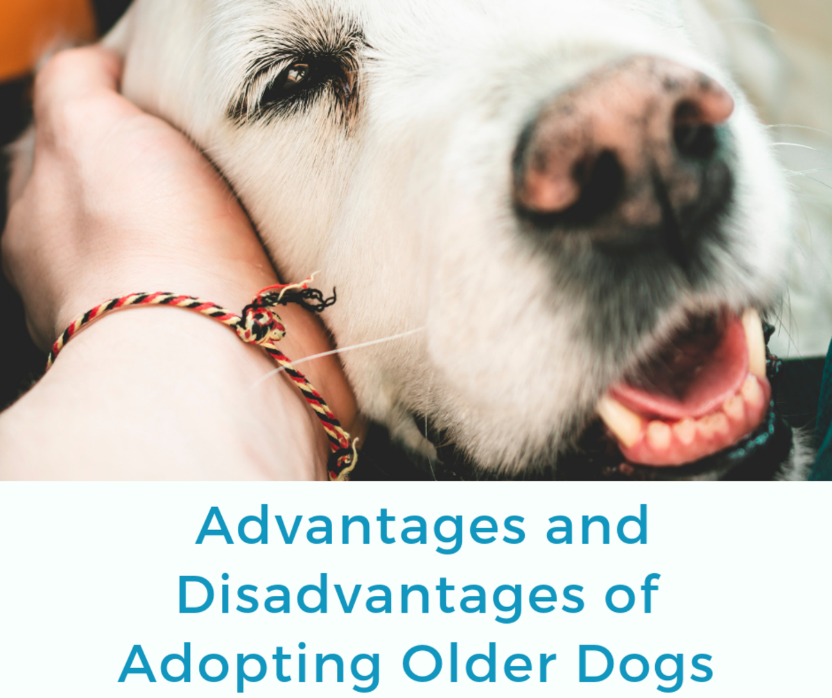Should you adopt an older dog? Read on to learn if an older dog is right for you.