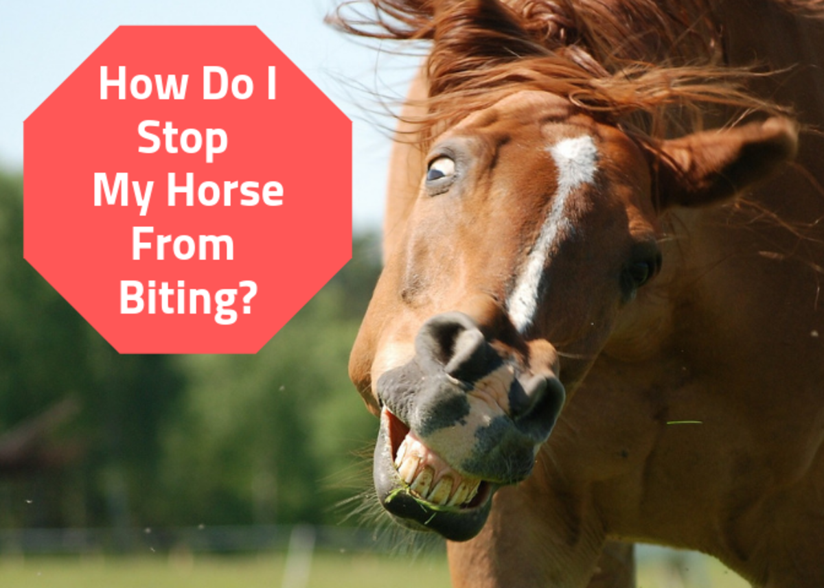 Get advice on stopping a horse from biting, managing horses who bite too much, and providing first aid for horse bites.