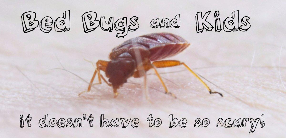 pictures of bed bug bites on kids dengarden