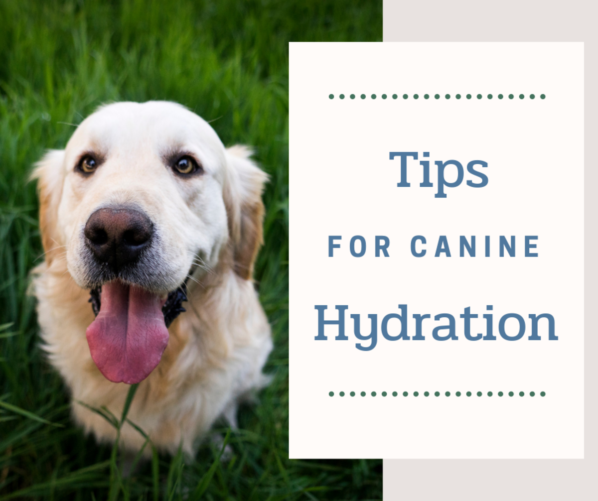 Spending time outdoors with your canine companion can be extremely rewarding, but you need to take the proper precautions—a hydrated pet is a happy pet!