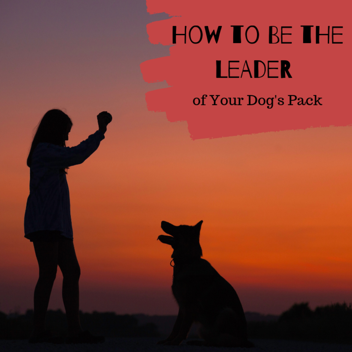 Your dog will thrive with leadership. Help him feel more secure by establishing yourself as the alpha.