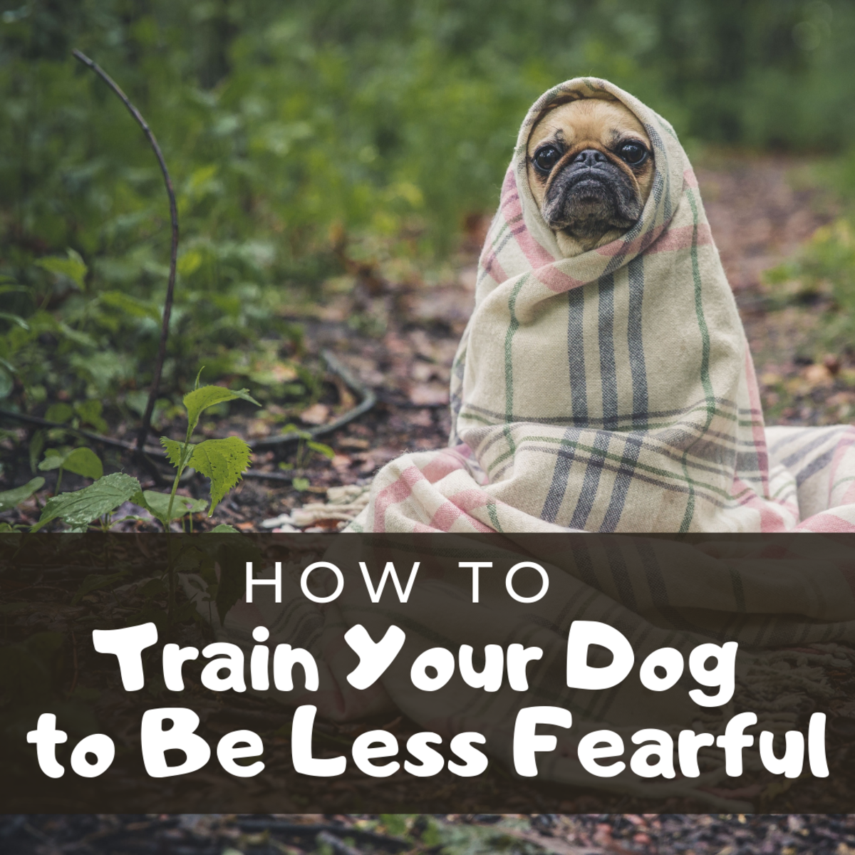 Can You Reinforce Your Dog's Fear?