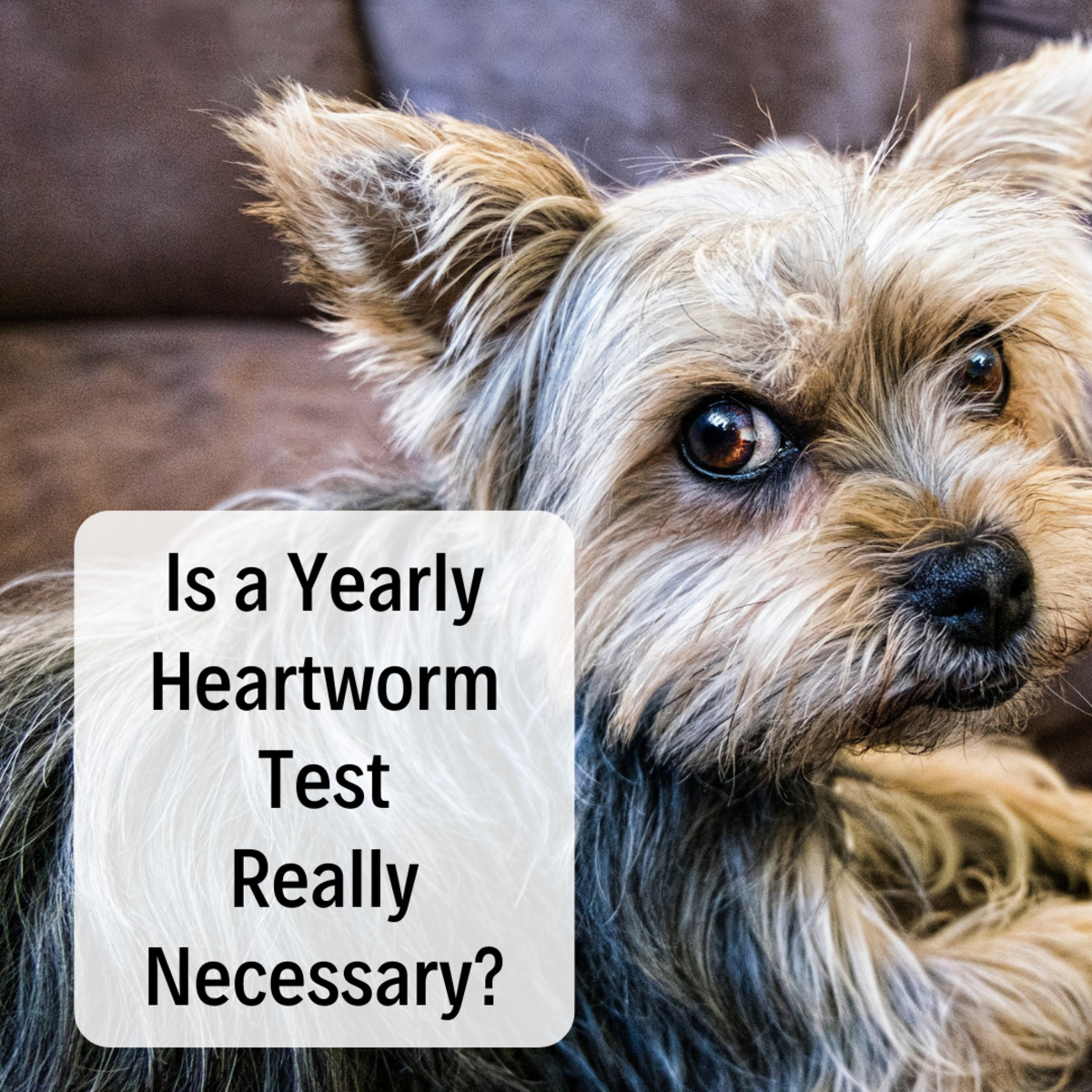 Why Your Dog Does Not Need a Heartworm Test Every Year