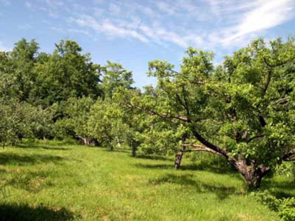 Fruit and Nut Producing Trees for USDA Hardiness Zone 8B
