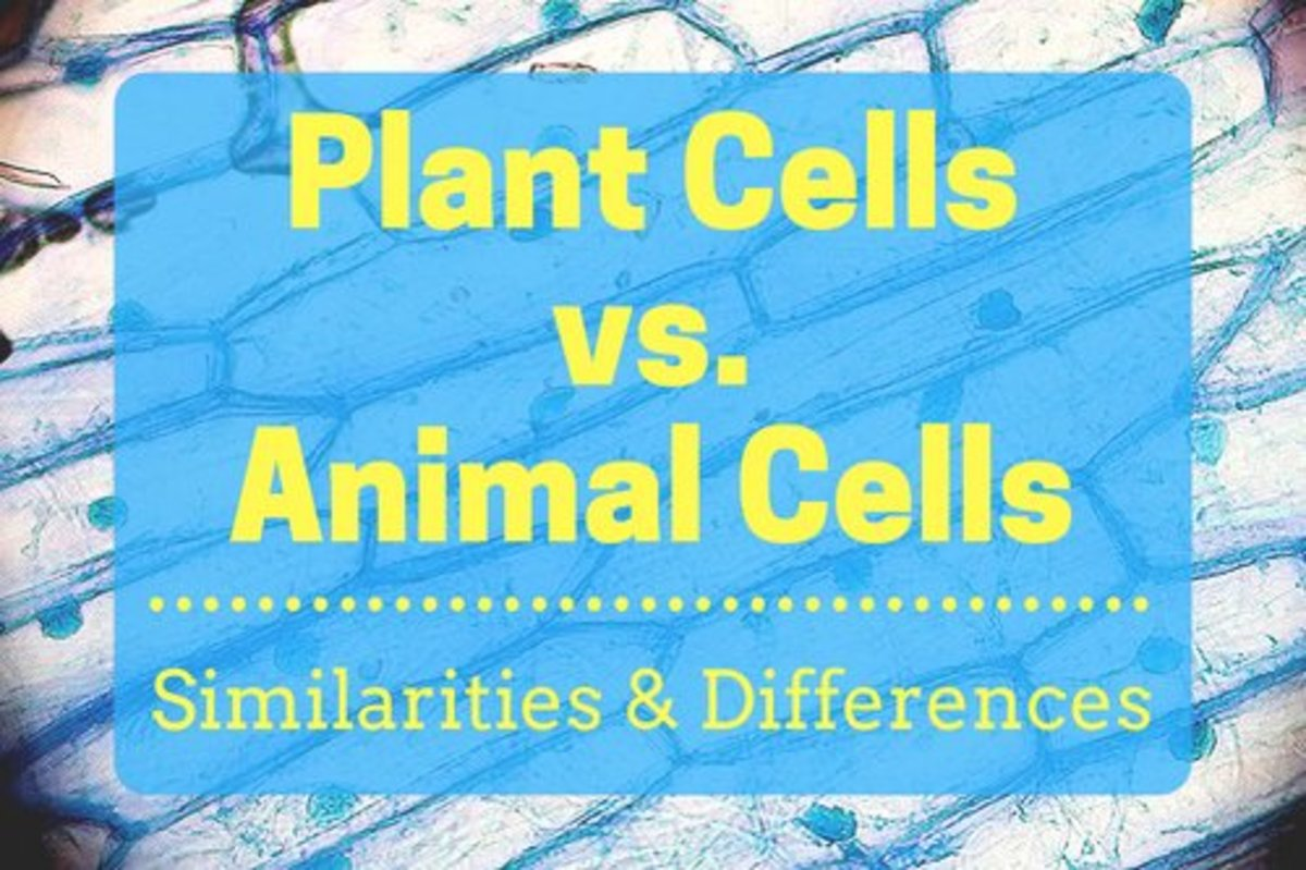 Plant Cells Vs Animal With Diagrams