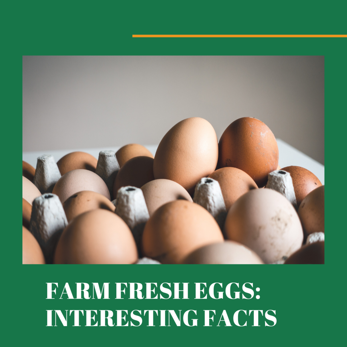 Here's everything you didn't know about farm fresh eggs.
