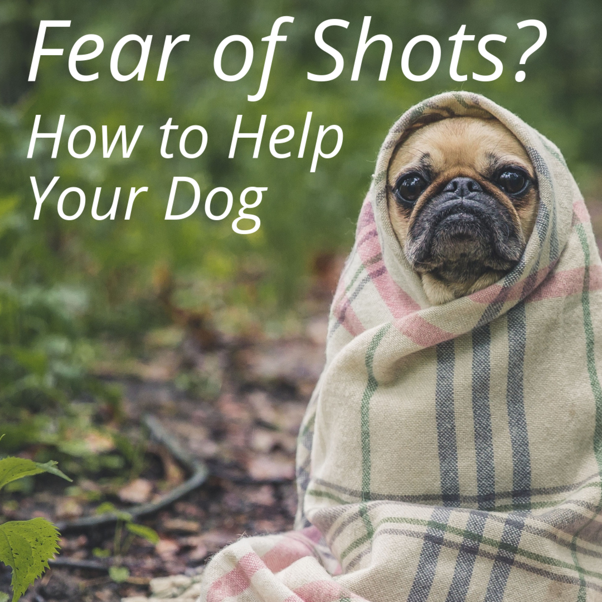 How to Make Your Dog Less Fearful of Shots