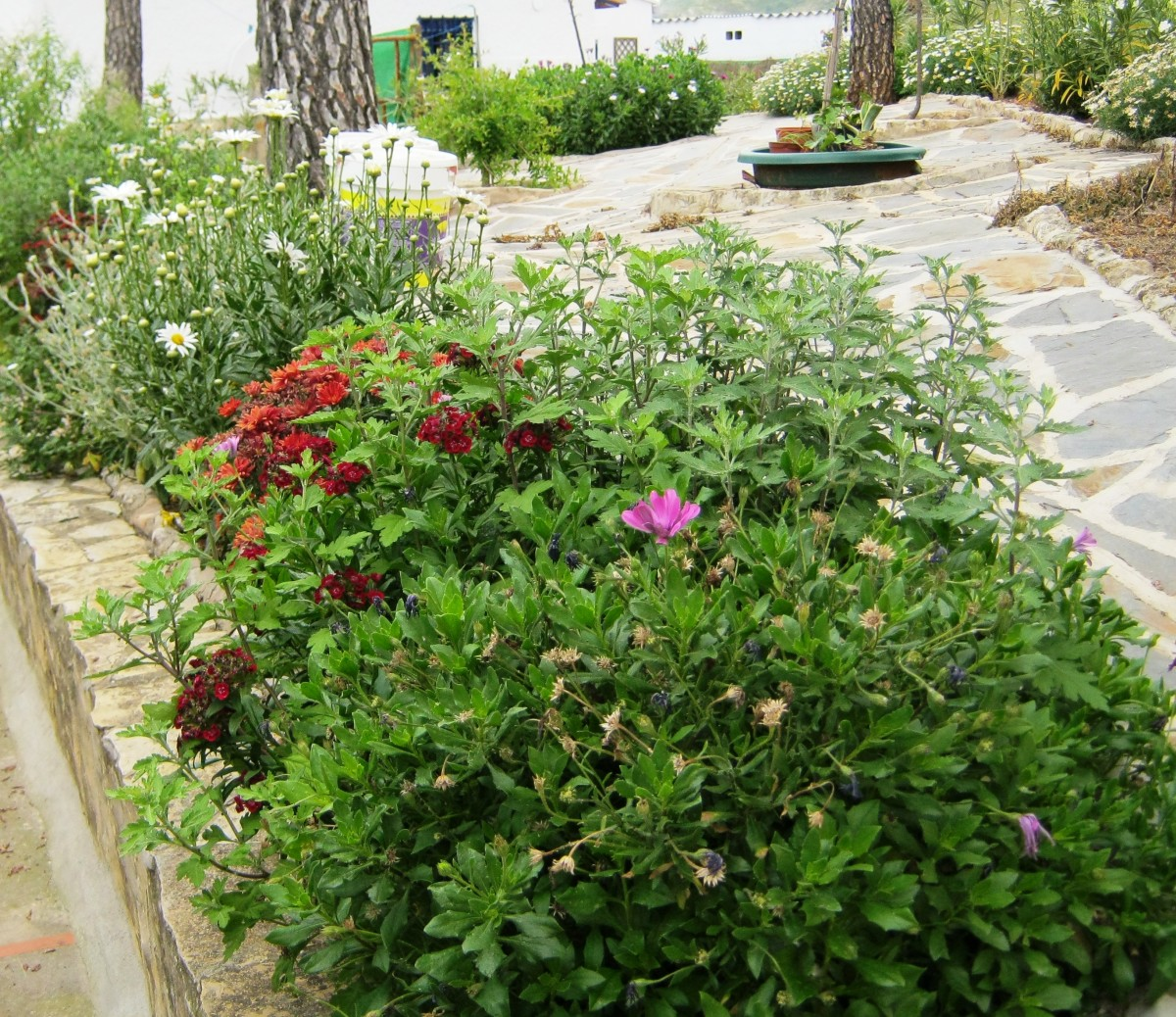 How To Make A Garden On A Budget Top Money Saving Tips