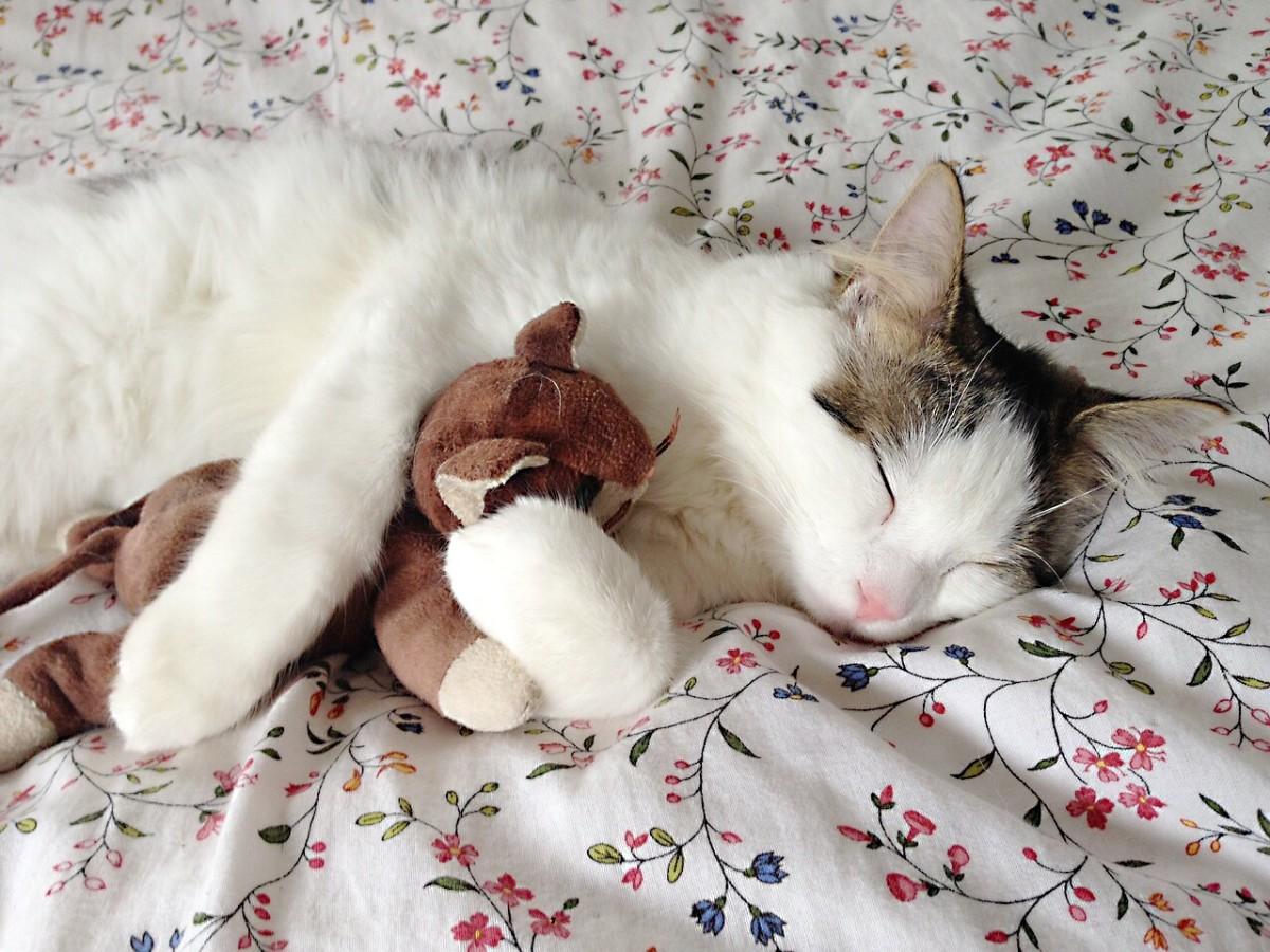 Cat toys can carry the feline distemper virus.