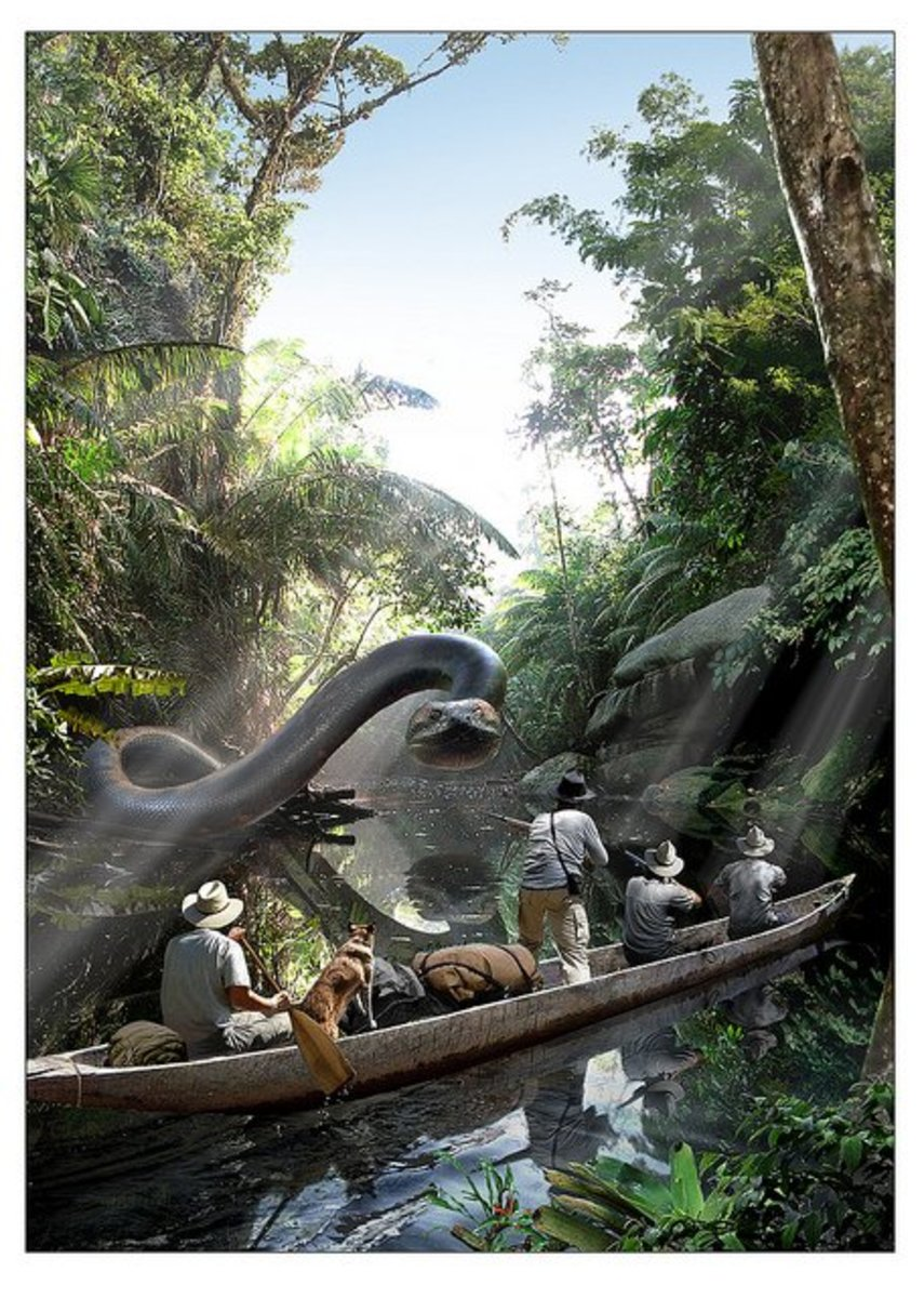 The Biggest Spring 2016 Fashion Trends On Pinterest: Titanoboa: The World's Largest Snake Ever