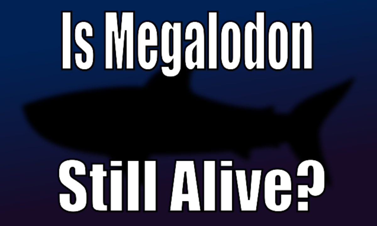 Megalodon Sightings: Is the Megalodon Shark Still Alive?