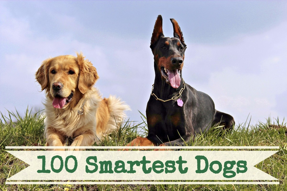 A List of the 100 Smartest Dog Breeds