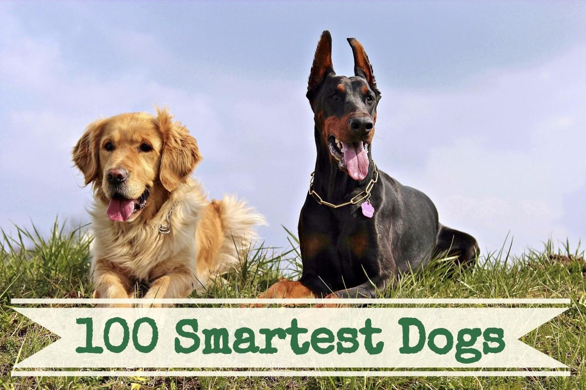 A List Of The 100 Smartest Dog Breeds