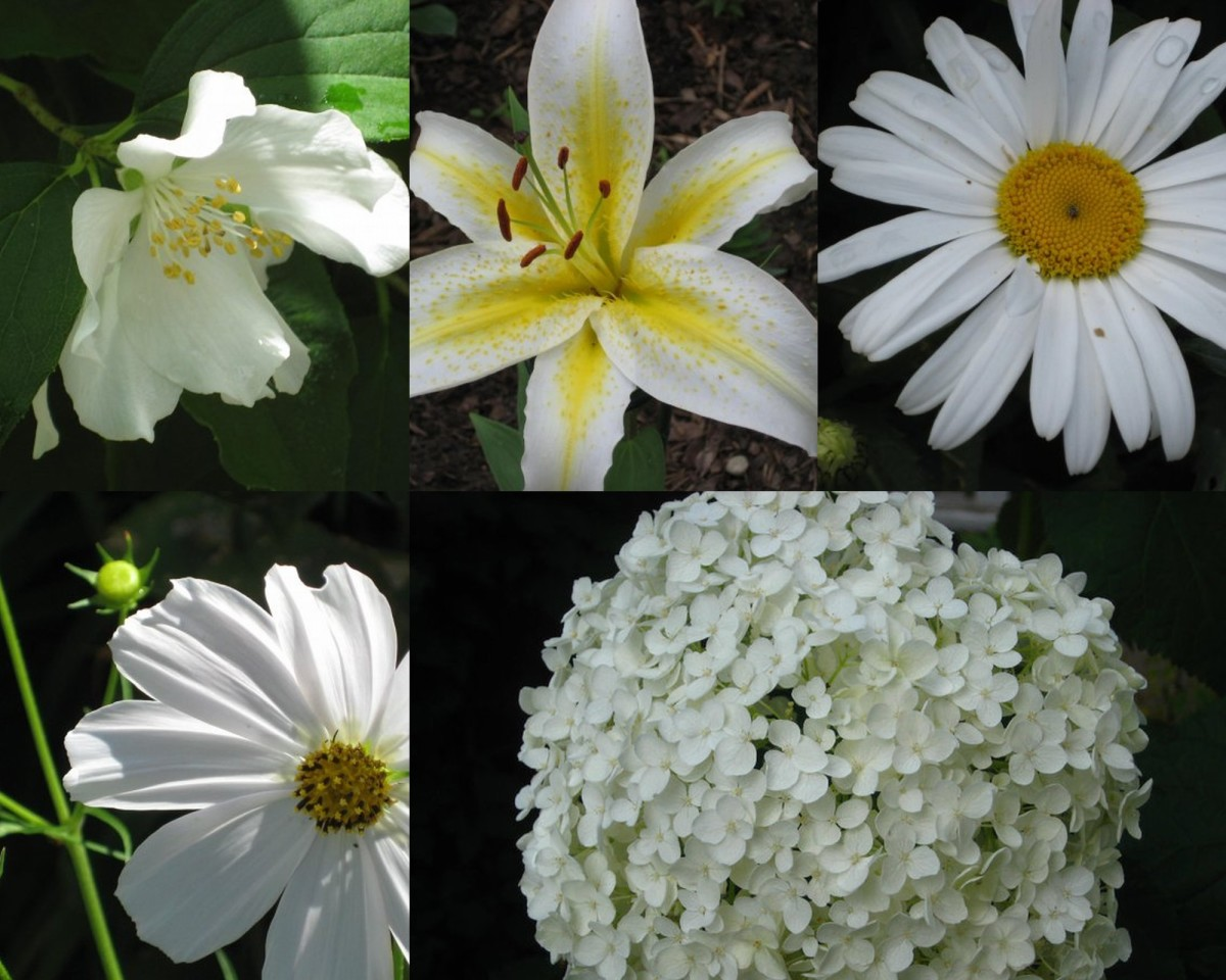 Plants with White Flowers - Perennials, Annuals, Bulbs and Shrubs