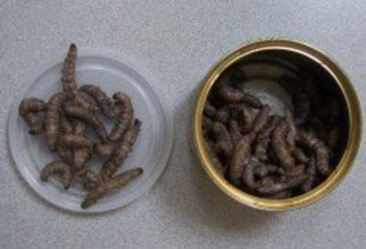 Can-O-Worms, Crickets, and Insects