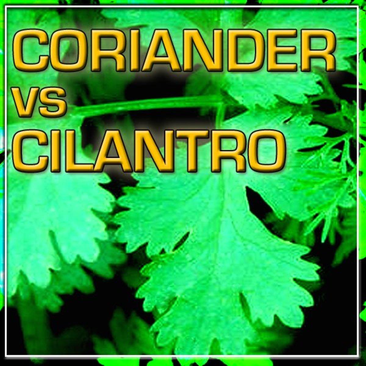Coriander vs Cilantro