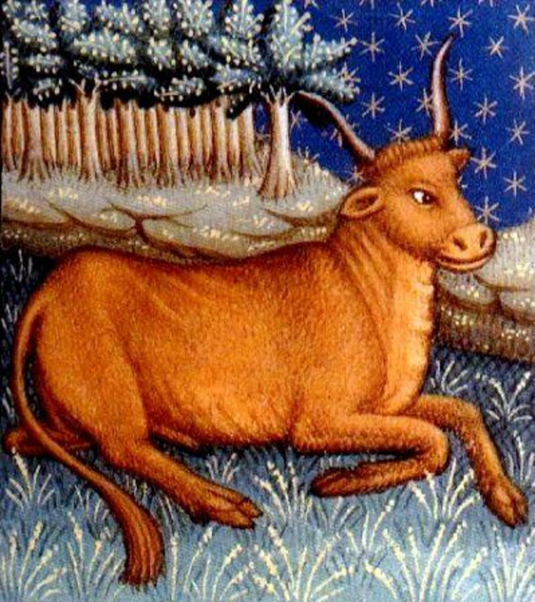 The Astrological symbol for those born with the Sun in the Taurus constellation is the Bull.  This could help us to understand a Taurean's stubborn streak, digging their hooves in and not budging in an area where they have made a firm decision.