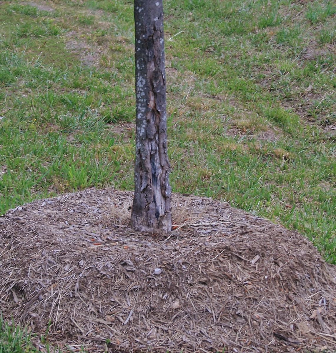 Common Mulching Mistakes