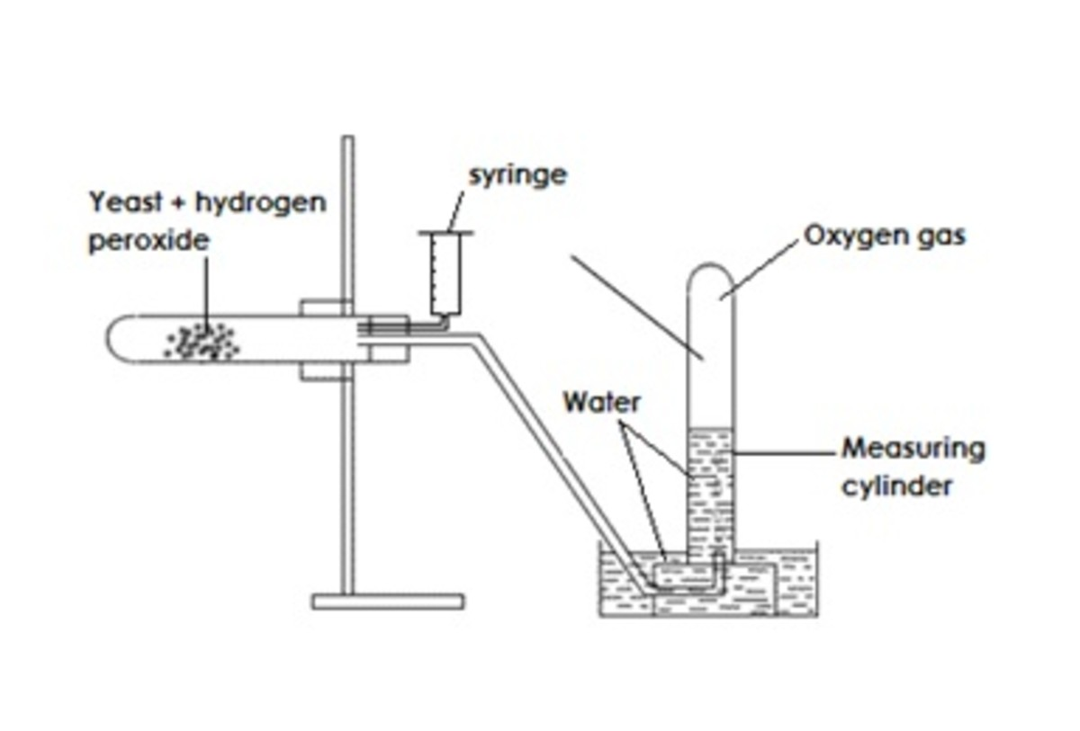 Figure 1. Experiment diagram.