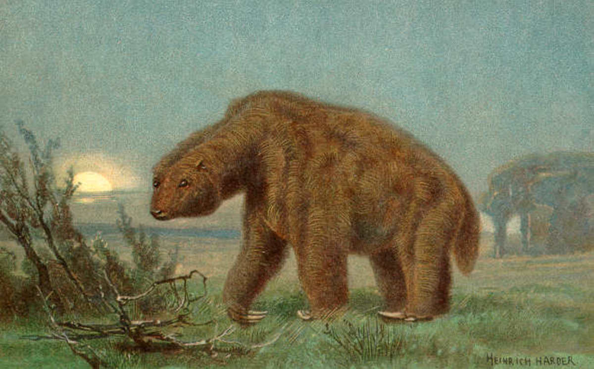 "The massive Megatherium ground sloth was a terrifying beast for sure.  Note the ""backward facing"" feet."