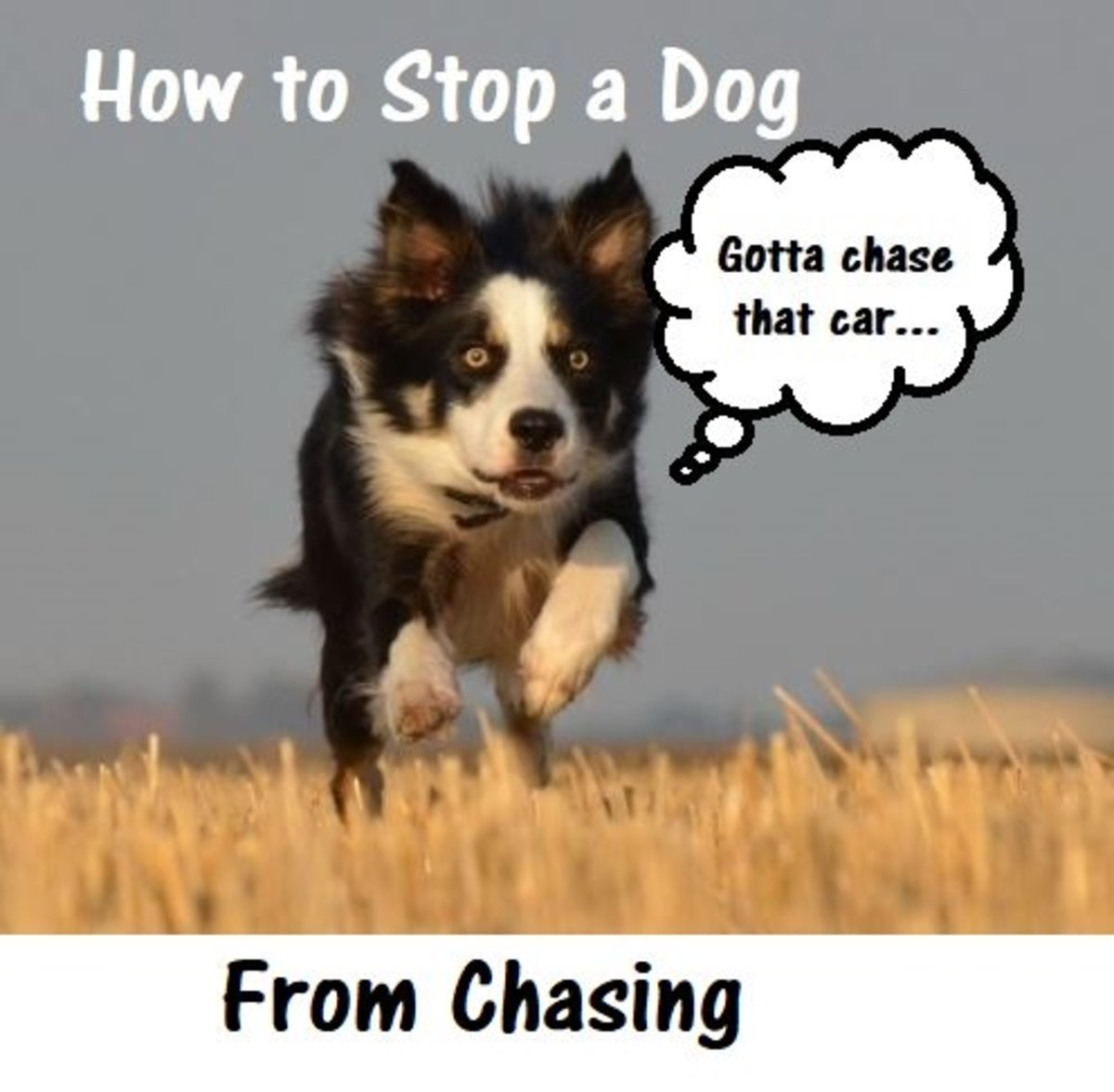How to Stop a Dog From Chasing Everything
